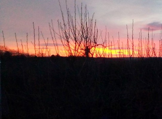 Sonnenaufgang Januar